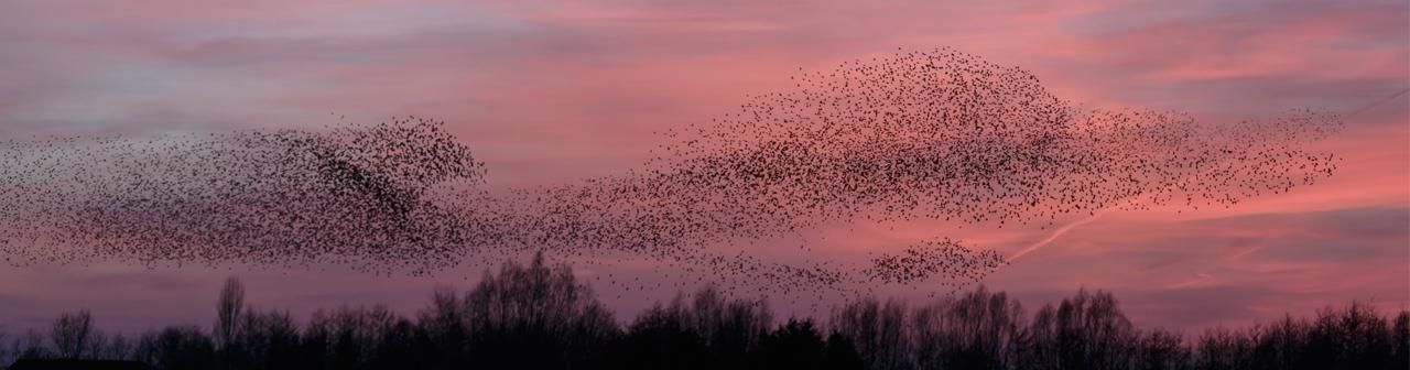 Evolve_Banner_Birds_2